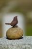 kleiner Vogel auf Grabstein