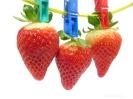 Trocken Obst