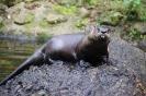 der freche Otter